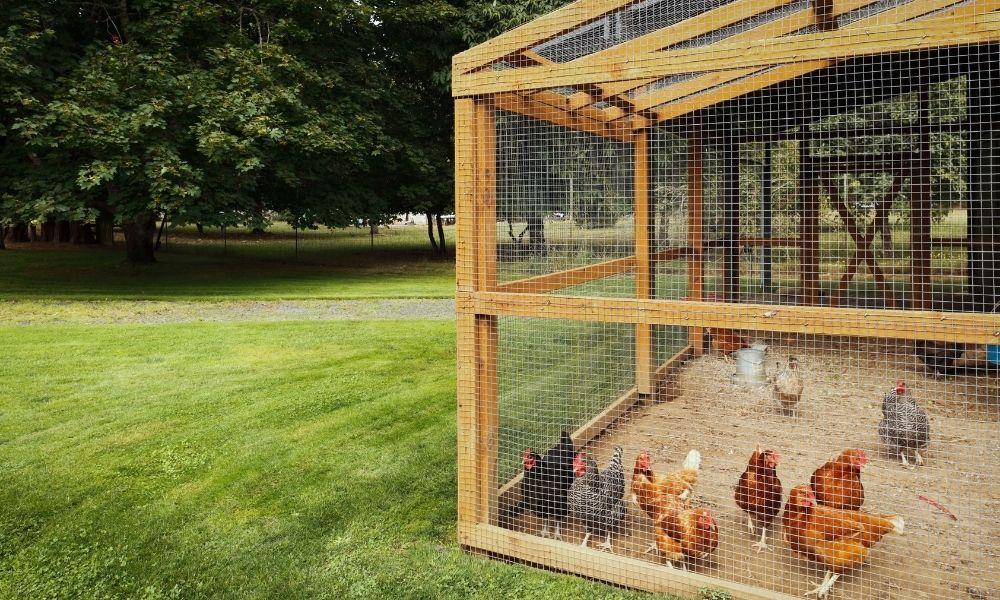 Kippenhok kippenren maken