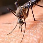 De vier beste tips om insecten te bestrijden in huis